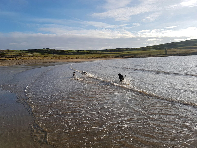 Brighouse Bay Holiday Park - Pet friendly
