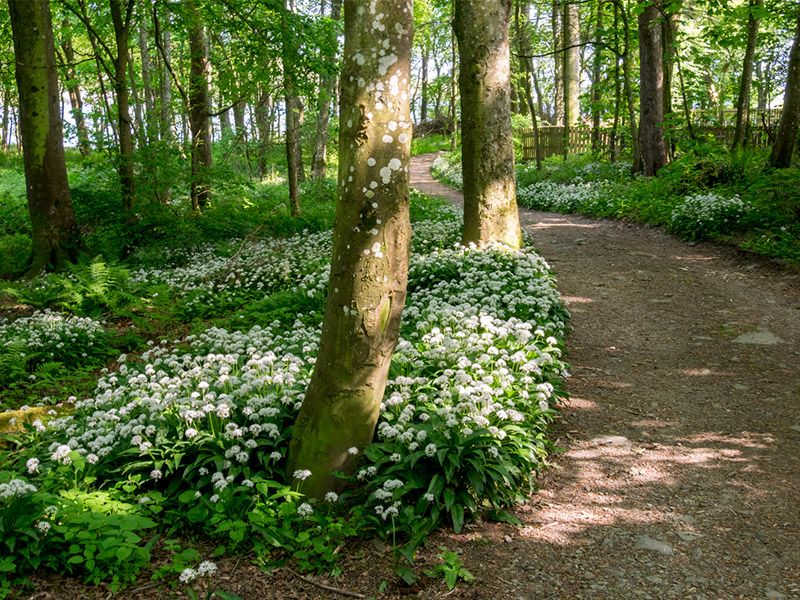 Enjoy our woodland walks